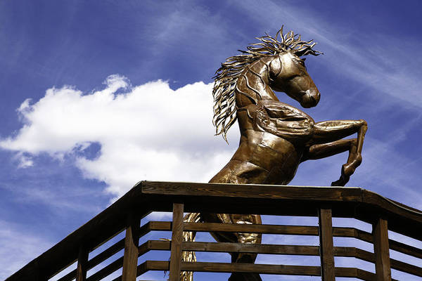 Photograph - Horse Rising Up by Marilyn Hunt
