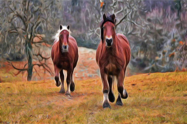 Painting - Horse Run by Harry Warrick