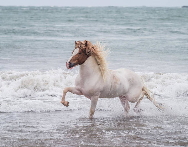 Wall Art - Photograph - Horse Running On Coastline, Iceland by Panoramic Images