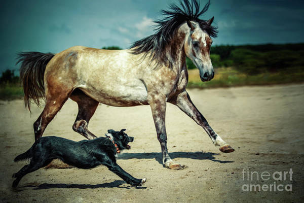 Photograph - Horse Running With Dog by Dimitar Hristov