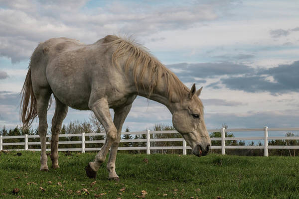 Photograph - Horses #1 by Patti Deters