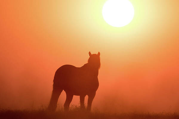Photograph - Horse Silhouette by Wesley Aston