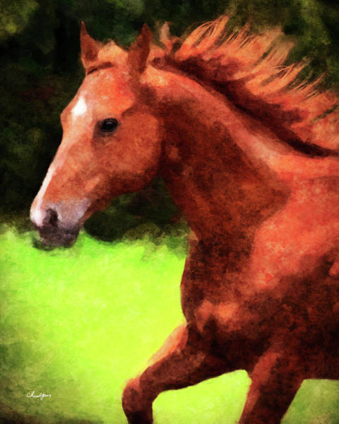 Digital Art - Horse Study #17 by Everlasting Equine Horse Art