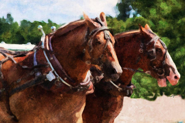 Digital Art - Horse Study #19 by Everlasting Equine Horse Art
