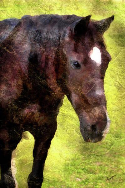 Digital Art - Horse Study #5 by Everlasting Equine Horse Art