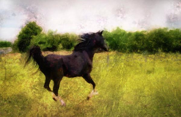 Digital Art - Horse Study #7 by Everlasting Equine Horse Art
