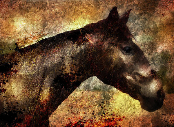 Digital Art - Horse Study #8 by Everlasting Equine Horse Art