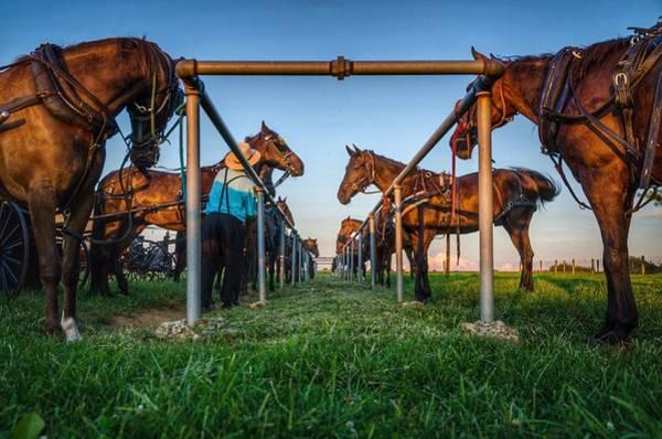 Brian Wilson Wall Art - Photograph - Horse Tie by Brian Wilson