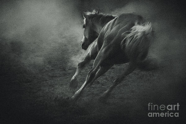 Photograph - Horse Trotting In Morning Fog by Dimitar Hristov
