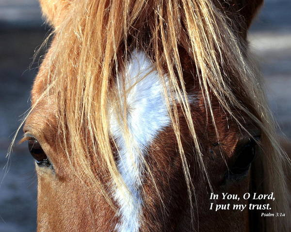 Psalms Photograph - Horse /trust by W Gilroy