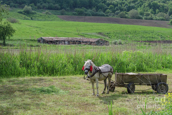 Photograph - Horsedrawn Haycart, Transylvania by Perry Rodriguez