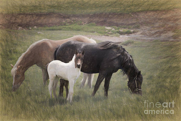 Mare And Foal Photograph - Horses And Colt  by Sharon McConnell
