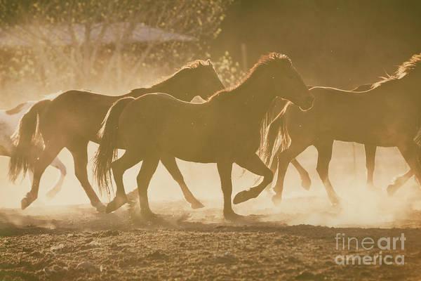 Photograph - Horses And Dust by Ana V Ramirez