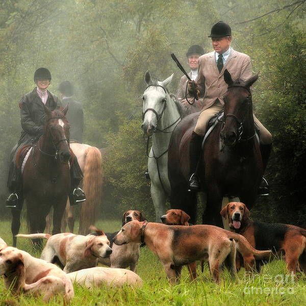 Photograph - Horses And Hounds 3  by Angela Rath