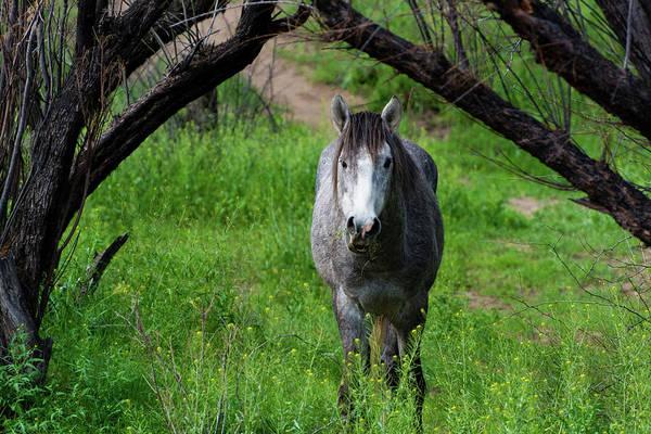 Photograph - Horse's Arch by Douglas Killourie