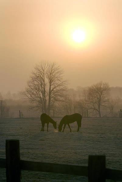 Photograph - Horses At Sunrise-1 by Steve Somerville