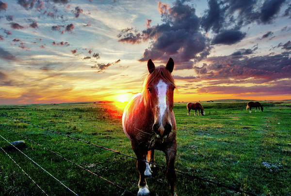 Horses At Sunset Art Print