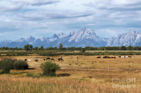 Photograph - Horses At The Tetons by Sharon Seaward