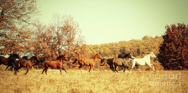 Photograph - Horses Galloping In The Autumn Field by Dimitar Hristov