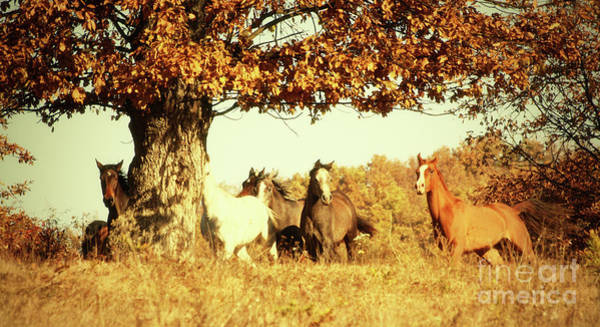 Photograph - Horses Galloping In The Autumn Tree by Dimitar Hristov