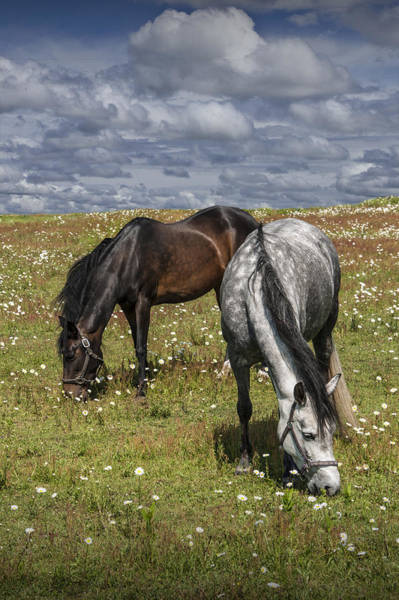 Photograph - Horses Grazing In A Pasture With Daisies Under A Cloudy Sky by Randall Nyhof