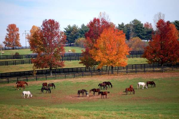 Photograph - Horses Grazing In The Fall by Sumoflam Photography