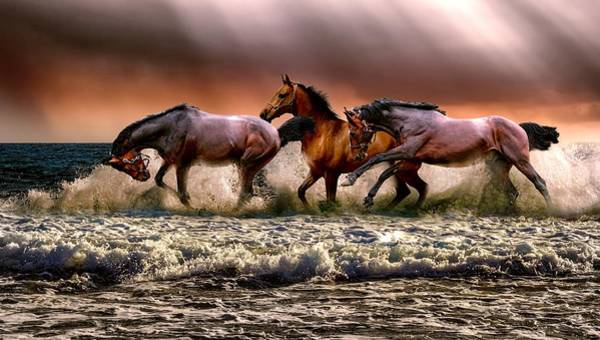 Painting - Horses Having A Paddle by Shabby Chic and Vintage Art