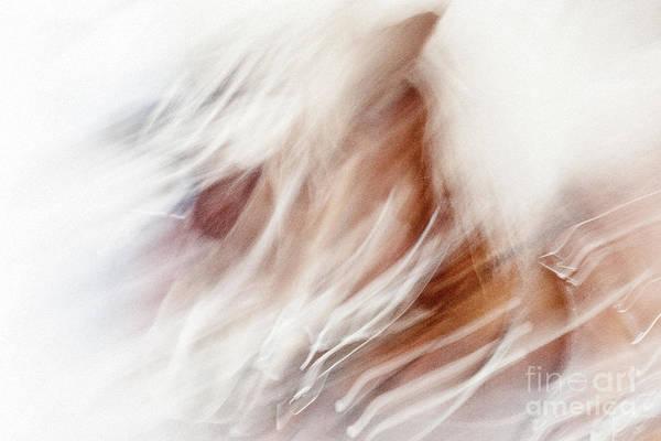 Photograph -  Horse's Head #7910 by Andrey Godyaykin