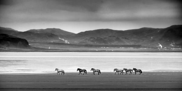Photograph - Horses, Iceland by Peter OReilly