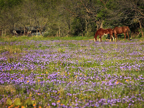 Photograph - Horses In A Field by Charles McKelroy