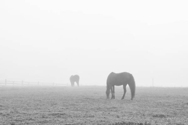 Wall Art - Photograph - Horses In Fog In Black And White by Bill Cannon