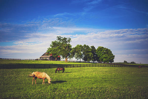 Midway Photograph - Horses In Midway by Shane Holsclaw