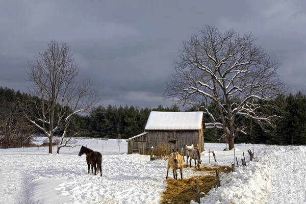Photograph - Horses In Snow by Ken Barrett