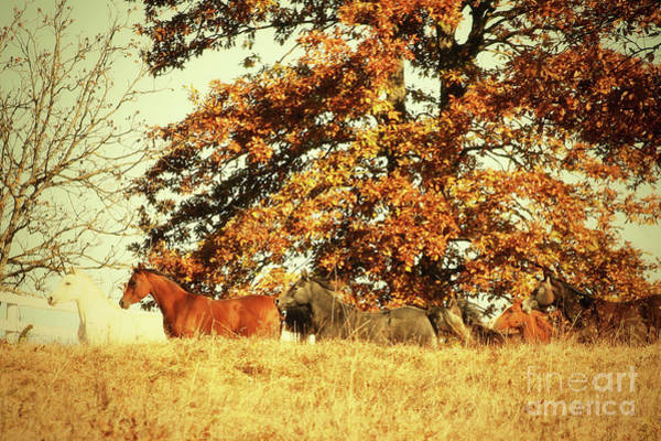 Photograph - Horses In The Autumn Forest by Dimitar Hristov