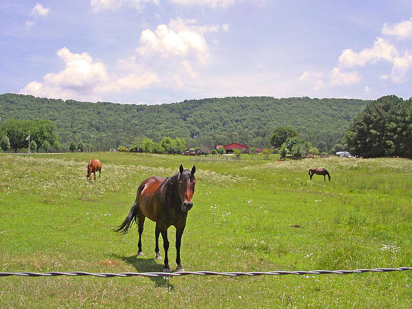 Photograph - Horses In The Pasture by Anne Cameron Cutri