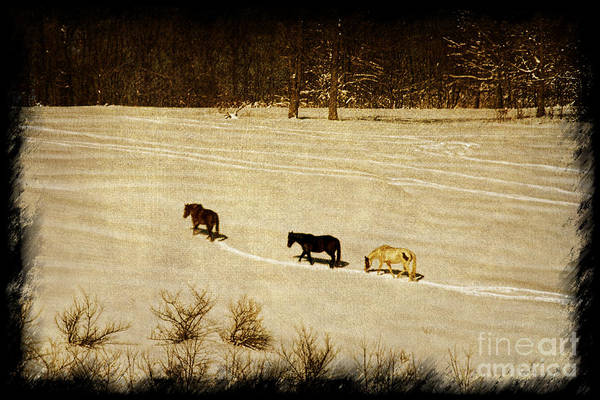Photograph - Horses Making A Trail by Dan Friend