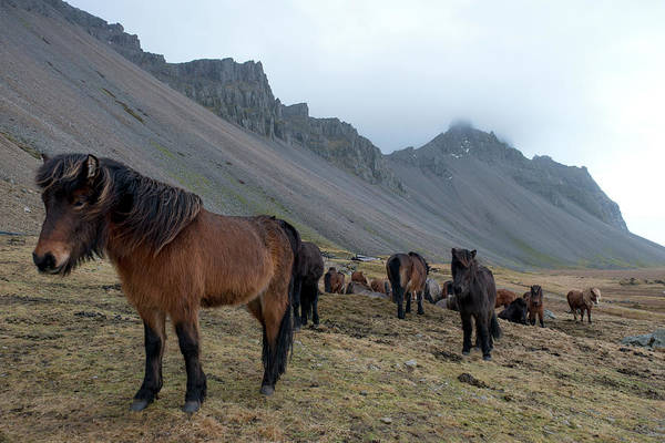 Photograph - Horses Near Vestrahorn Mountain, Iceland by Dubi Roman