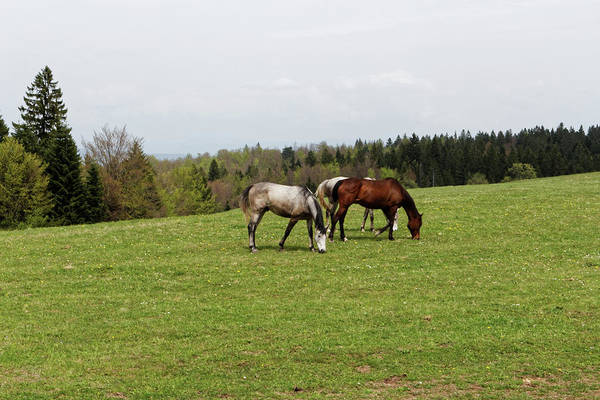 Wall Art - Photograph - Horses On Green Meadow by Jelena Stojic