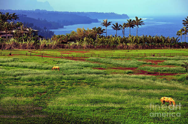 Photograph - Horses On The Garden Island Of Kauai, Hawaii, Usa by Sam Antonio Photography