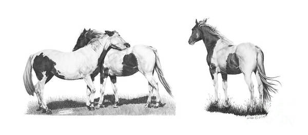 Drawing - Horses Pintos by Marianne NANA Betts