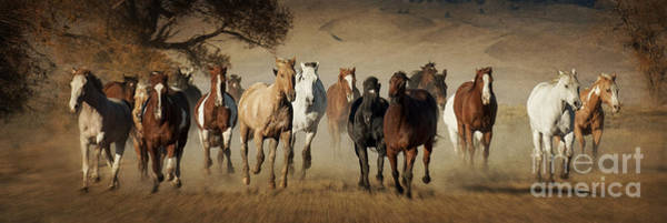 Herd Of Horses Wall Art - Photograph - Horses Running Free by Heather Swan