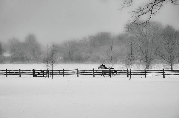 Photograph - Horses Running In The Snow - Whitemarsh Pa by Bill Cannon