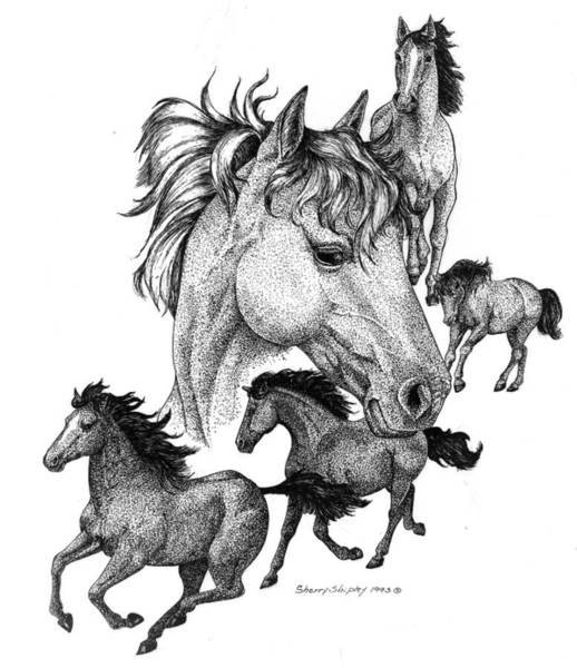 Drawing - Horses by Sherry Shipley