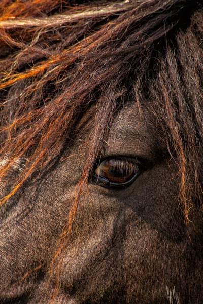 Thru Photograph - Horses Soul Is Thru The Eye by Karol Livote