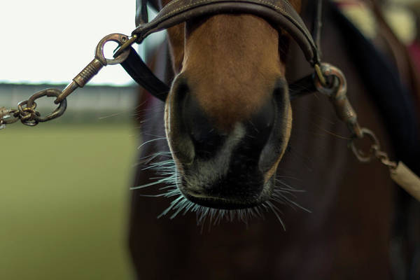 Wall Art - Photograph - Horse Whiskers by Stelios Kleanthous