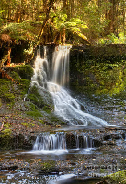 Wall Art - Photograph - Horseshoe Falls Tasmania by Bill  Robinson