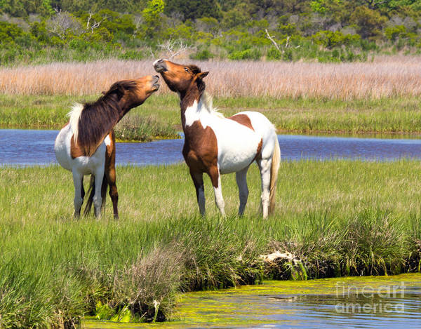 Photograph - Horsing Around by Rod Best