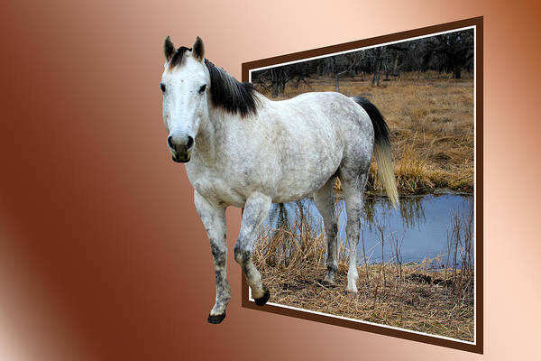 Photograph - Horsing Around by Shane Bechler