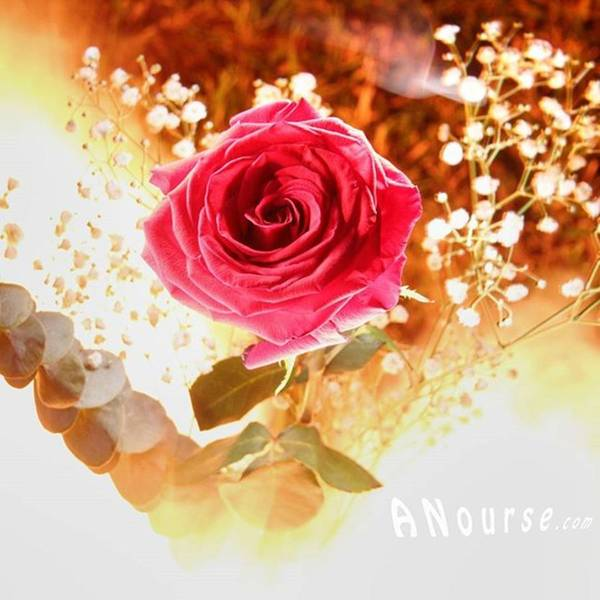 Roses Wall Art - Photograph - Hot Beauty  #fire #nophotoshop by Andrew Nourse