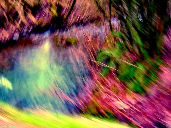 Wall Art - Photograph - Hot By The Pond  by Jane Tripp